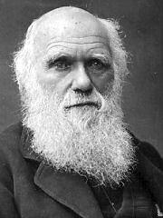 Der Darwin Affe Und Das Darwinisten Gefolge