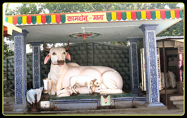 Kamadhenu - the sacred cow