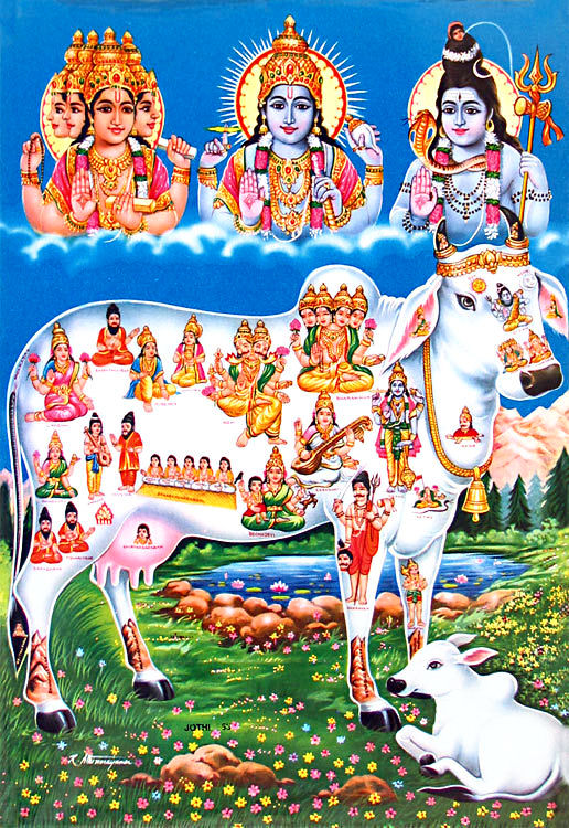 Cow-kamadhenu